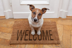 dog on welcome mat, pet friendly home additions